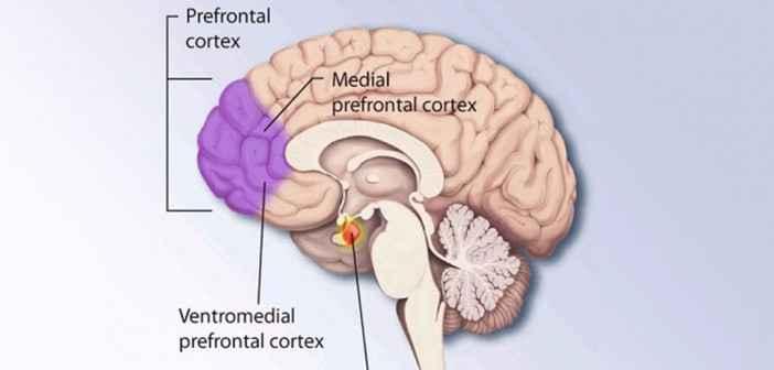 cortexul prefrontal